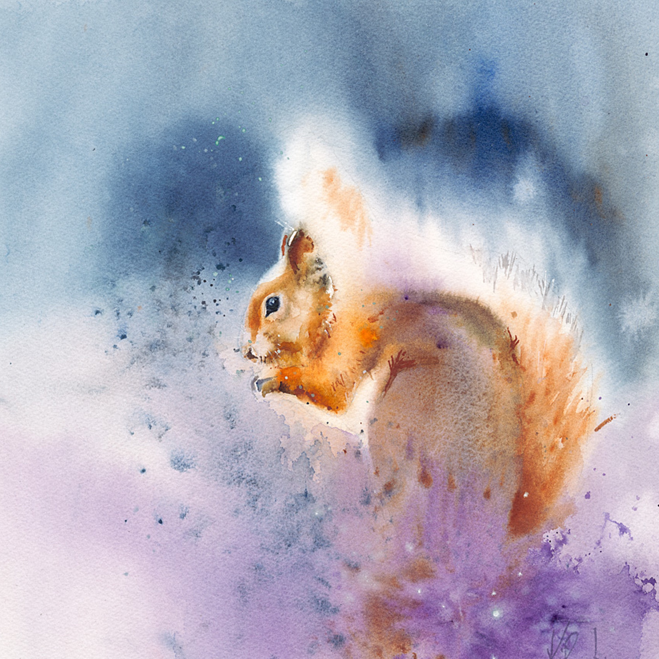 Red squirrel – live workshop