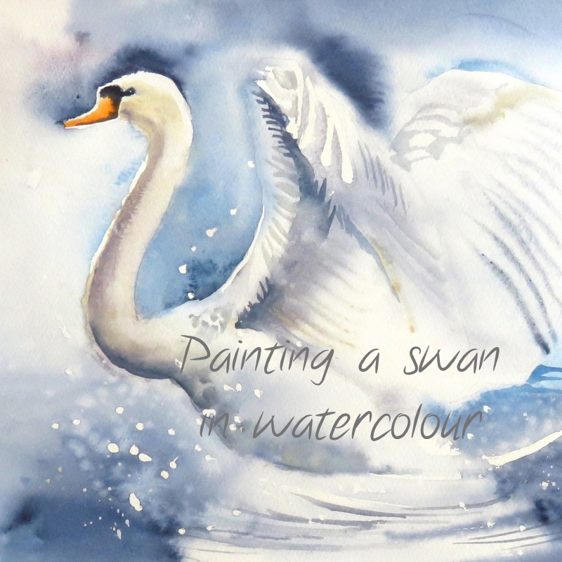 Swan – online tuition