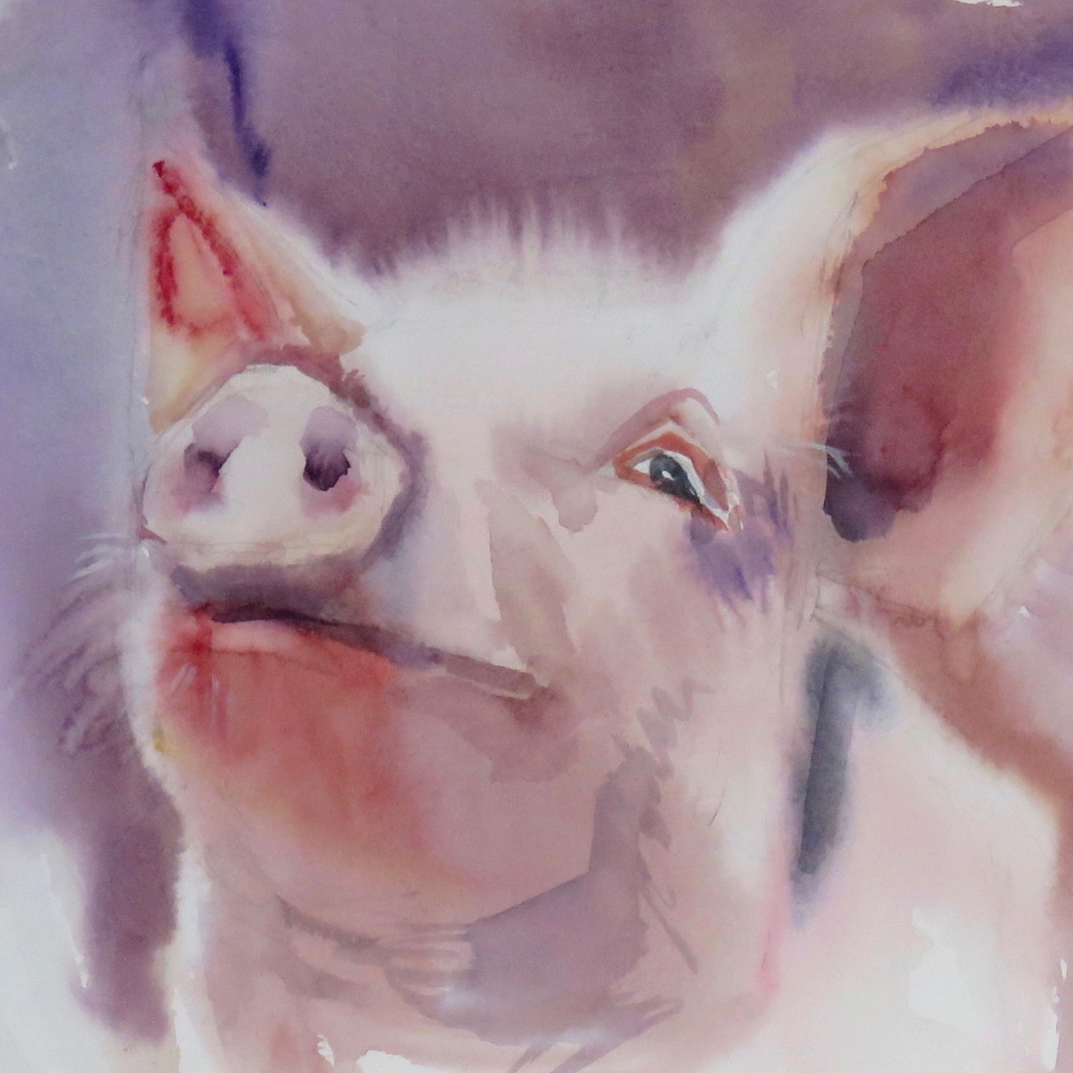 Pig in the pink – Card