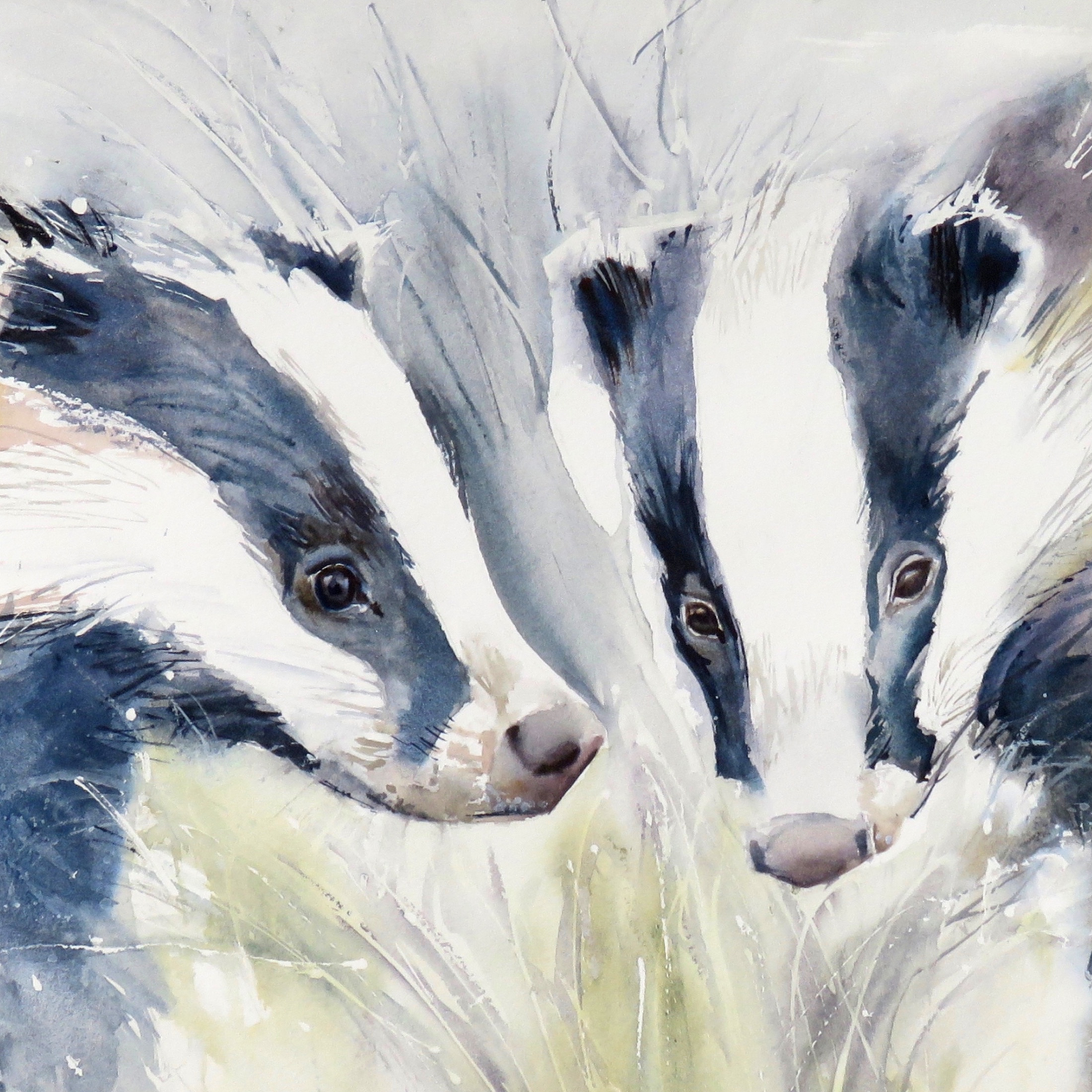 Double Trouble Badgers