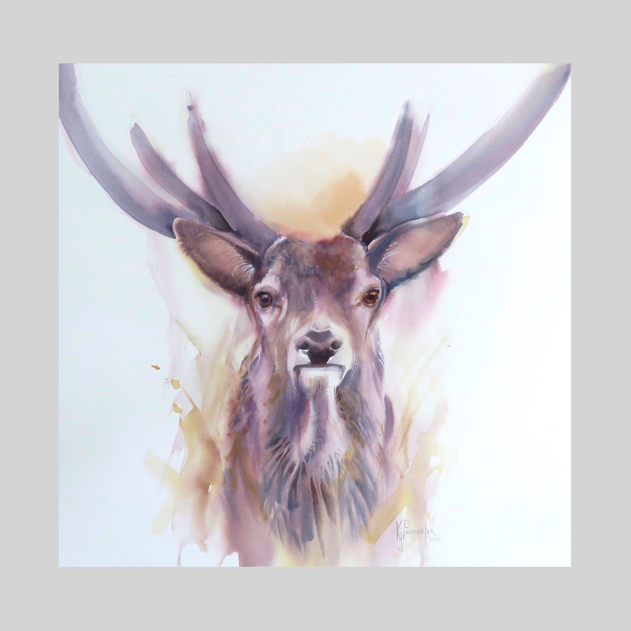Stag Majestic (at exhibition)