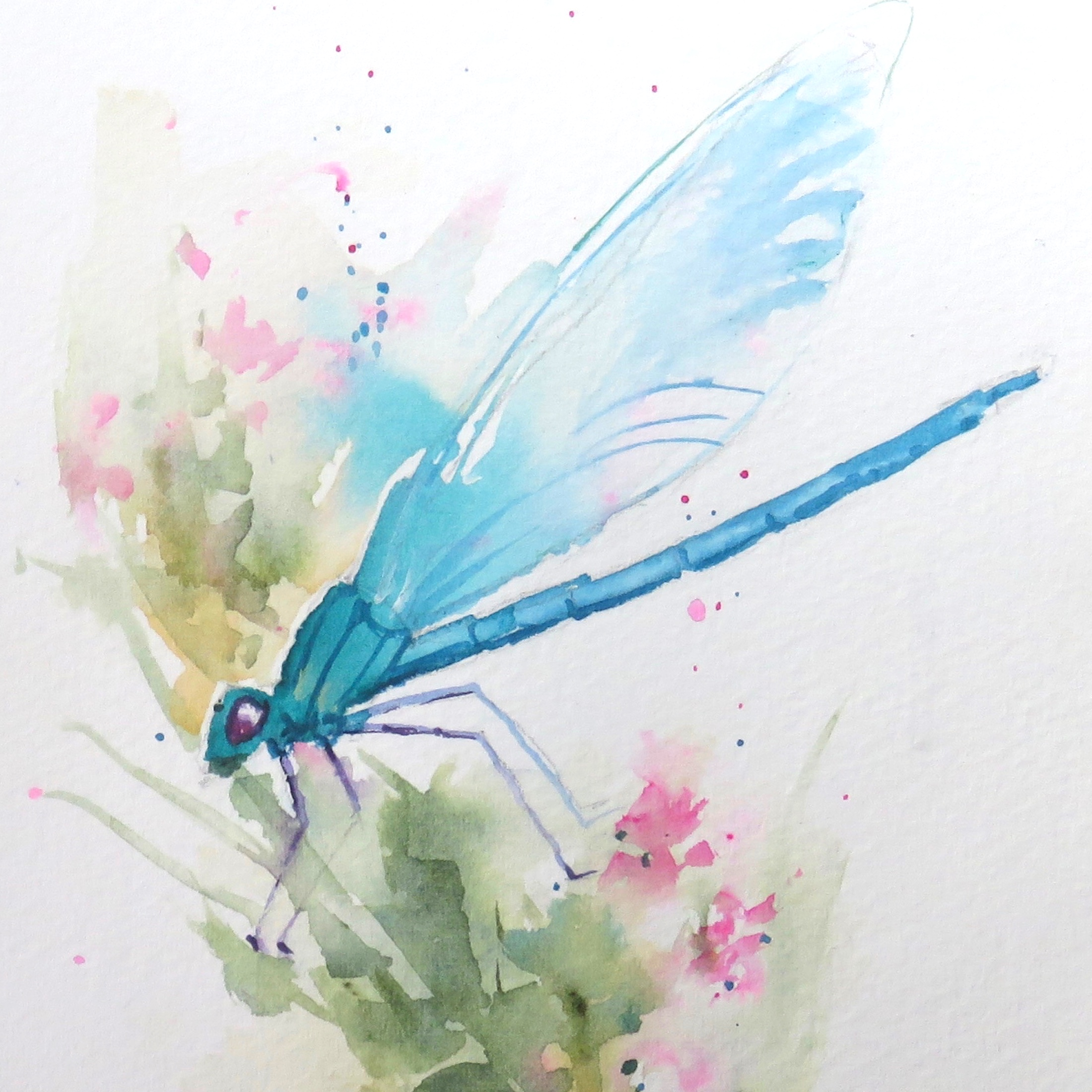 Dragonflies – online tuition