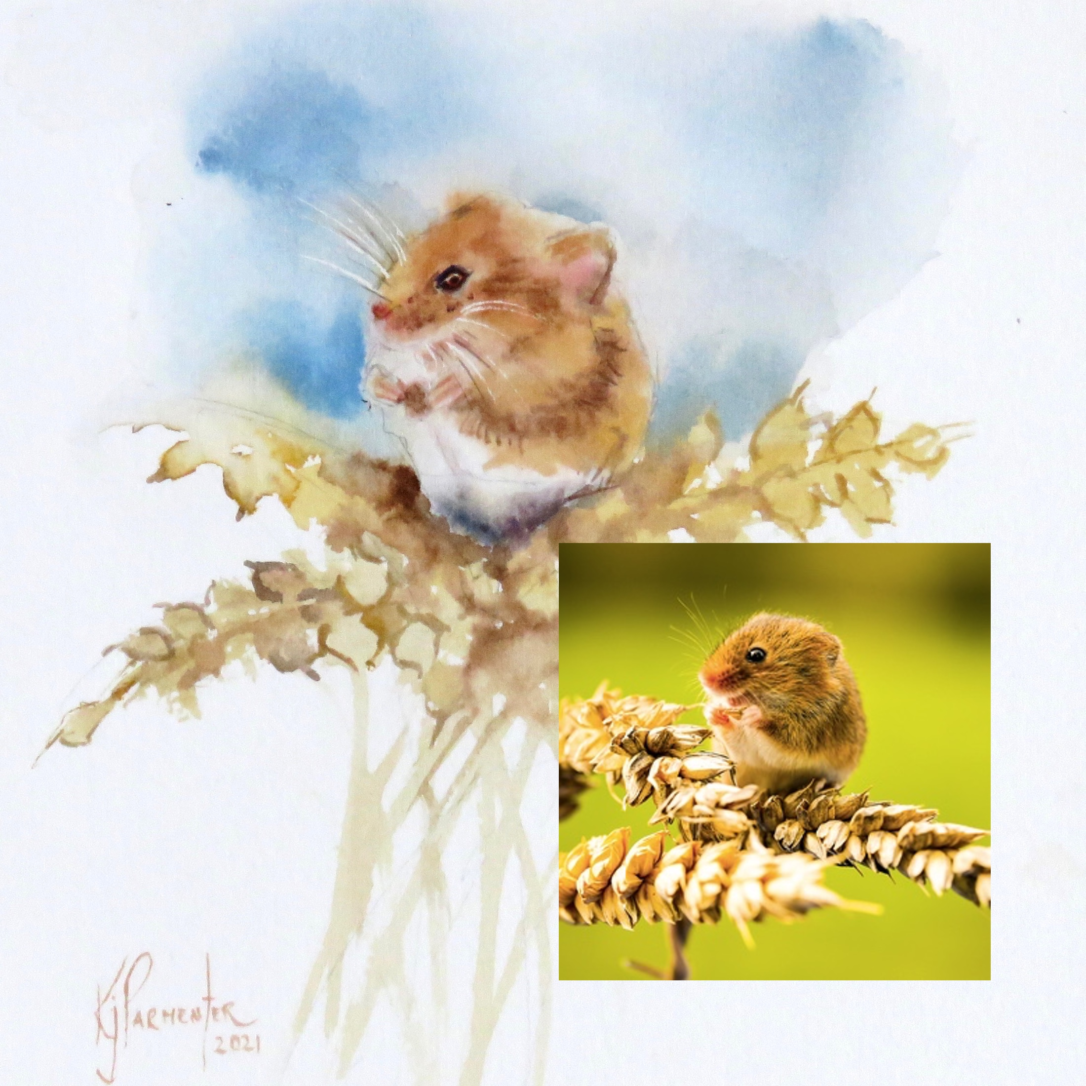 Harvest Mouse – online tuition