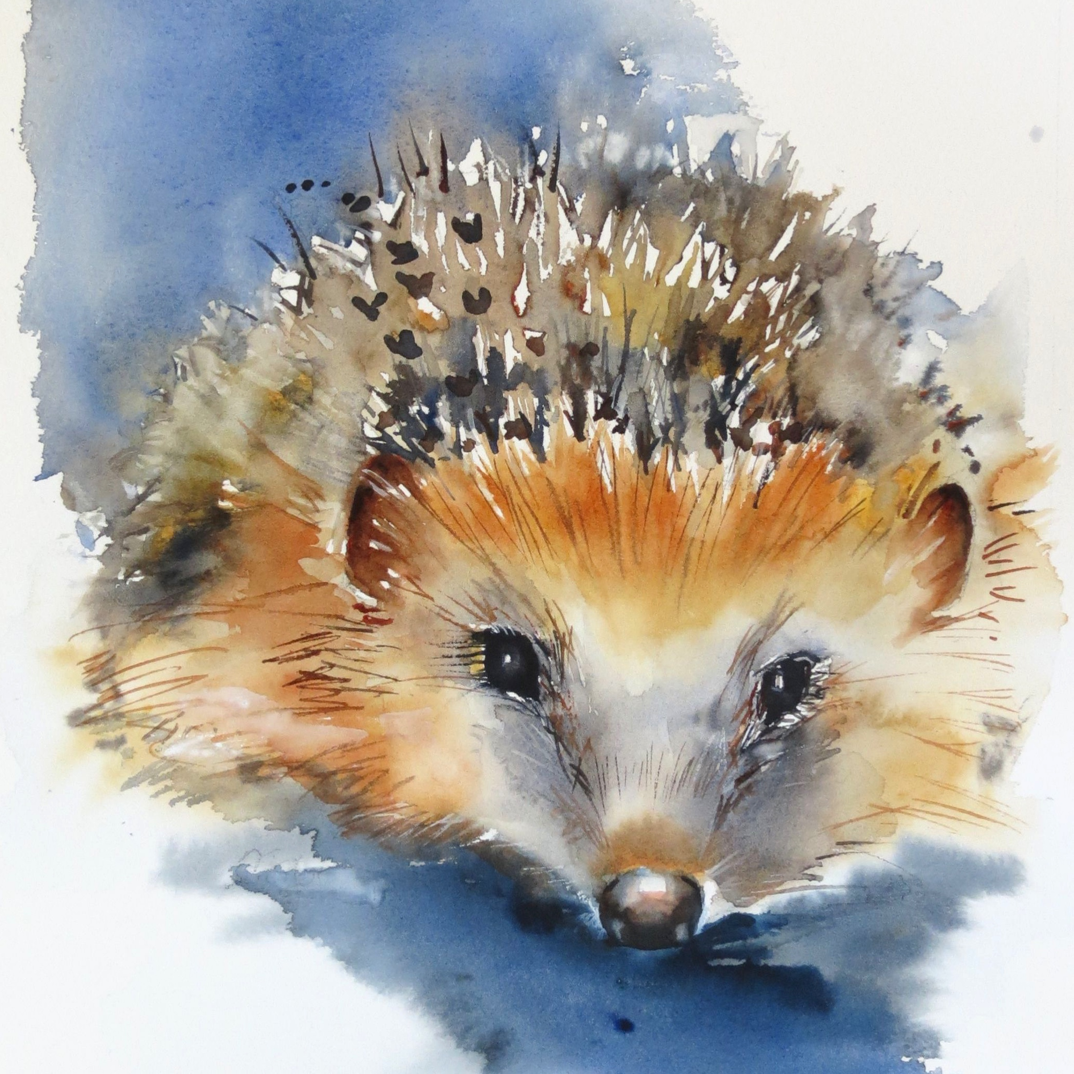 Hedgehogs and hedgerows – live workshop