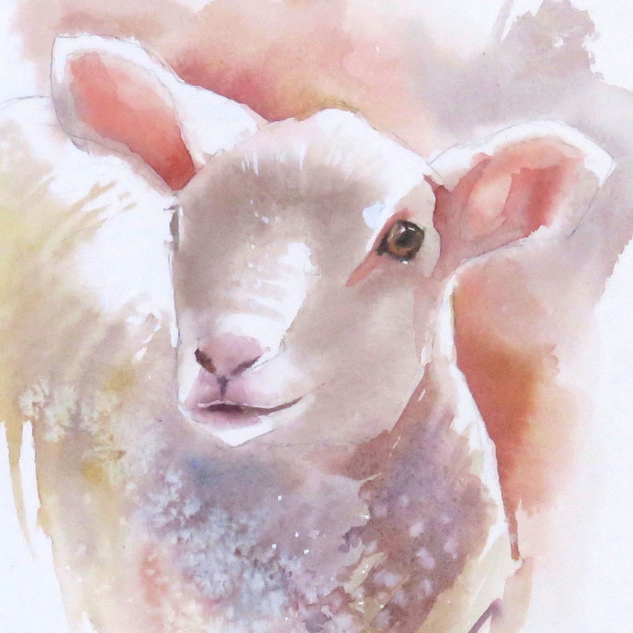 Spring lamb – online tuition (free)
