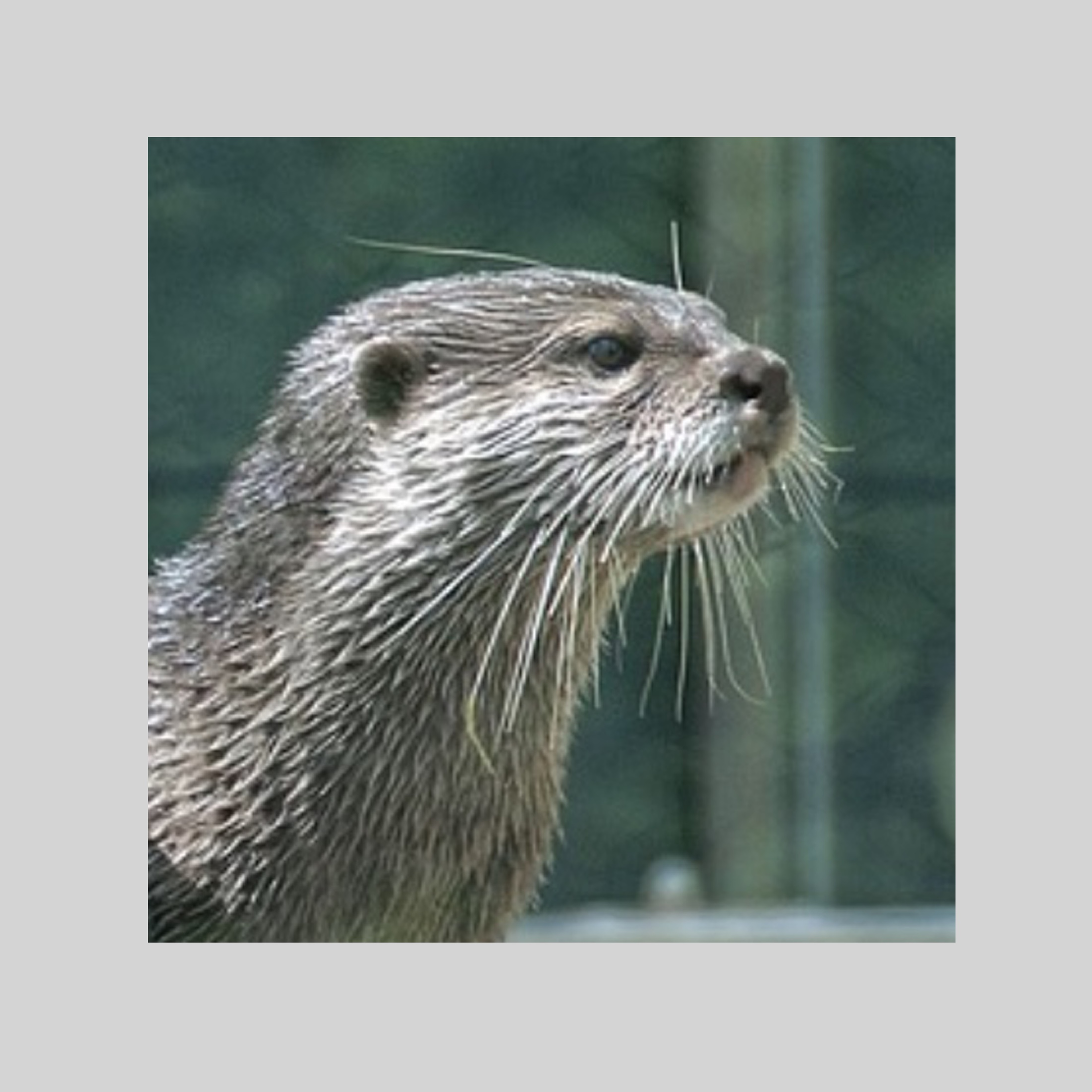 Otters – online tuition