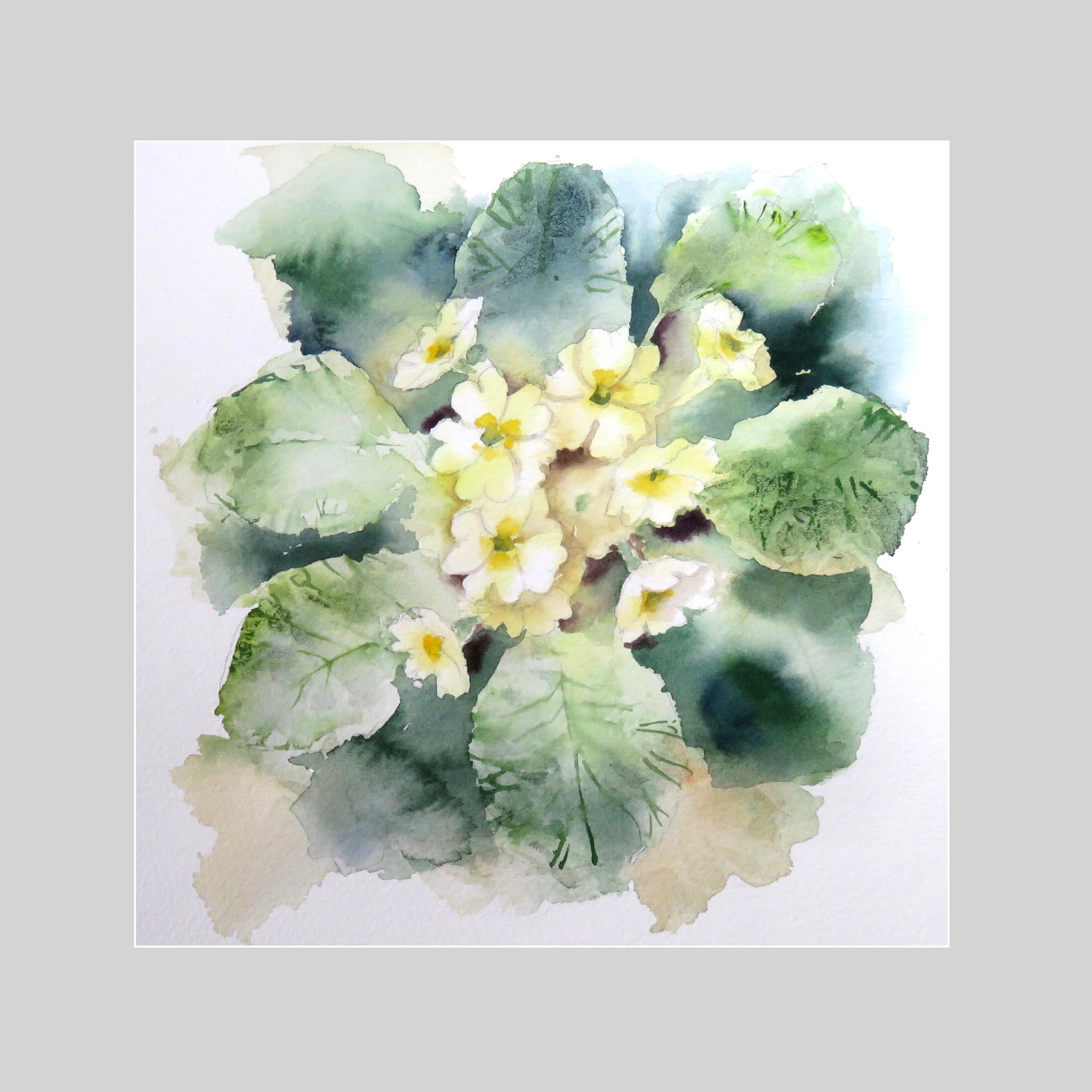 Wild primroses – online tuition